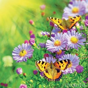 metulj-travnik_lightbox_image